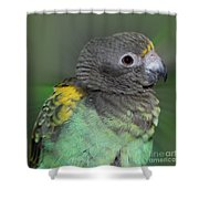 Sweet Baby Meyers Parrot Shower Curtain