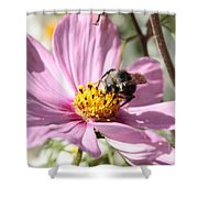 Sweet Bee On Pink Cosmos Shower Curtain