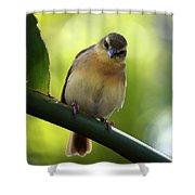 Sweet Bird On Branch Shower Curtain