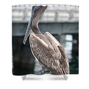 Sweet Brown Pelican - Digital Painting Shower Curtain