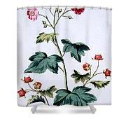 Sweet Canada Raspberry Shower Curtain