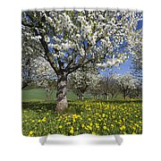 Sweet Cherry Orchard In Full Bloom Shower Curtain