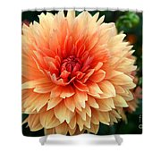 Sweet Dahlia Shower Curtain