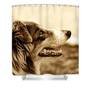 Sweet Doggie Shower Curtain