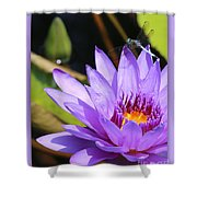 Sweet Dragonfly On Purple Water Lily Shower Curtain