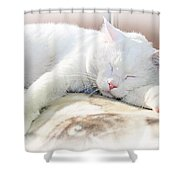 Sweet Dreams Shower Curtain by Andee Design