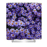 Sweet Dreams Of Purple Daisies Shower Curtain