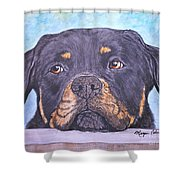 Rottweiler's Sweet Face Shower Curtain