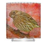 Sweet Female House Finch 3 - Digital Paint Shower Curtain