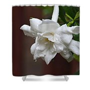 Sweet Gardenia Rain Shower Curtain