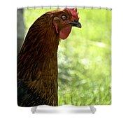 Sweet Hen Shower Curtain