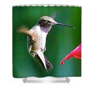 Sweet Hummingbird Birthday Card Shower Curtain