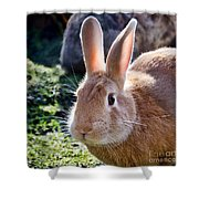 Sweet Little Bunny Shower Curtain