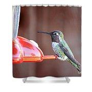 Sweet Little Hummingbird On Feeder Shower Curtain