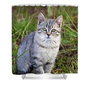 Sweet Little Tabby Kitten Shower Curtain