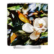 Sweet Magnolia Blossom Shower Curtain