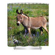 Sweet Miniature Donkey Shower Curtain