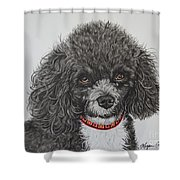Sweet Miss Molly The Poodle Shower Curtain