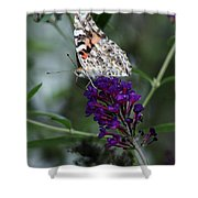 Sweet Nectar Shower Curtain