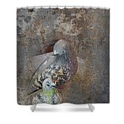 Sweet Pair Shower Curtain by Carla Parris