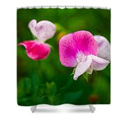 Sweet Pea Blossoms Shower Curtain