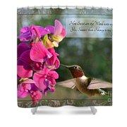 Sweet Pea Hummingbird Iv With Verse Shower Curtain