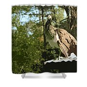 Sweet Pea On The Hen House Roof Shower Curtain
