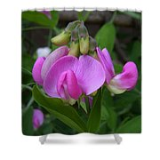 Sweet Pea Perfection Shower Curtain