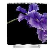 Sweet Pea Study Shower Curtain by Anne Gilbert