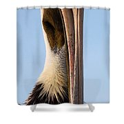 Sweet Pelican Face Shower Curtain