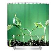 Sweet Pepper Shower Curtain