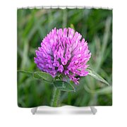 Sweet Pink Clover Shower Curtain