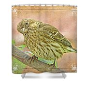 Sweet Pose Female Housefinch Shower Curtain