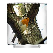 Sweet Robin Shower Curtain