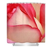 Sweet Rose Shower Curtain