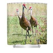 Sweet Sandhill Crane Family Shower Curtain