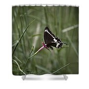 Sweet Seduction Shower Curtain
