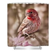 Sweet Songbird Shower Curtain