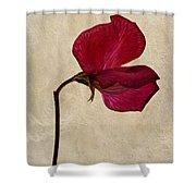 Sweet Textures Shower Curtain