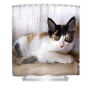 Sweet The Kitten Shower Curtain
