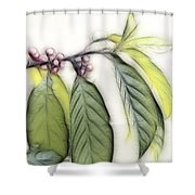Sweet Tranquility Shower Curtain