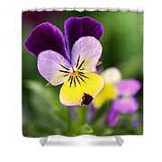 Sweet Violet Shower Curtain