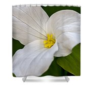 Sweet White Trillium 5 Shower Curtain