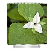 Sweet White Trillium Shower Curtain