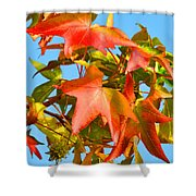 Sweetgum Leaves In Autumn Shower Curtain