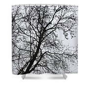 Sweetgum Silhouette On A Rainy Day Shower Curtain