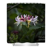 Sweetly Scented. Shower Curtain
