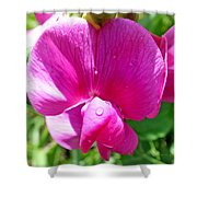 Sweetpea Flower Upclose Shower Curtain