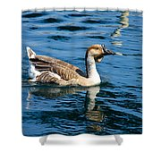 Swimming African Brown Goose Shower Curtain