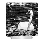 Swimming Beauty Shower Curtain